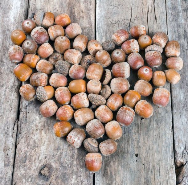 The Mighty Acorn: Eat Your Way Back Into The Web Of Life