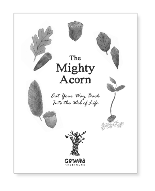 The Mighty Acorn - cover