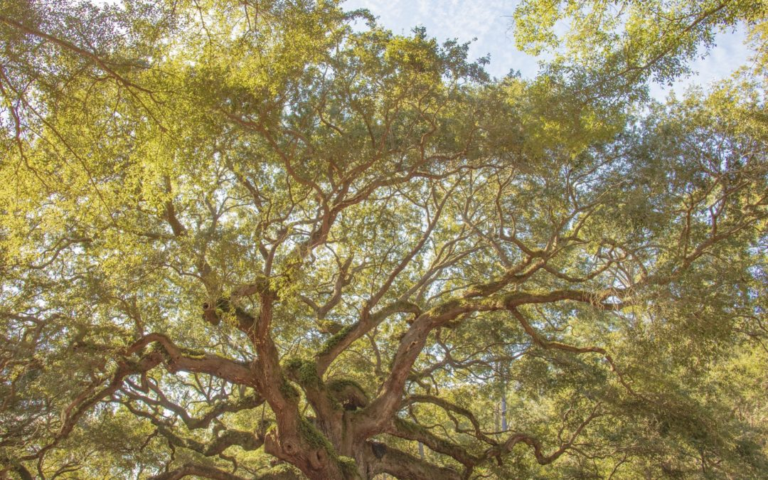 Bioneers Interview: Restoring the Oaks and our Connections with the Earth