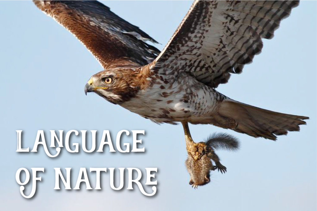 Language of Nature